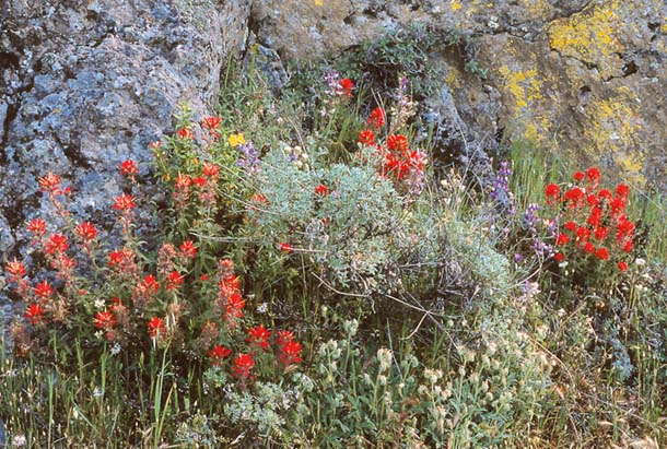 wildflowers by the trail