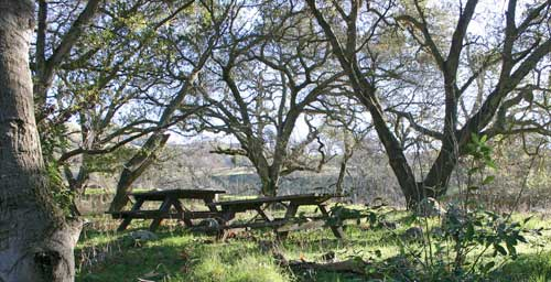 Picnic tables at Sunol Regional Wilderness