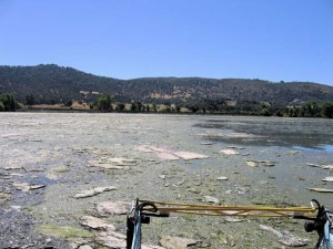 Algae bloom in Clear Lake