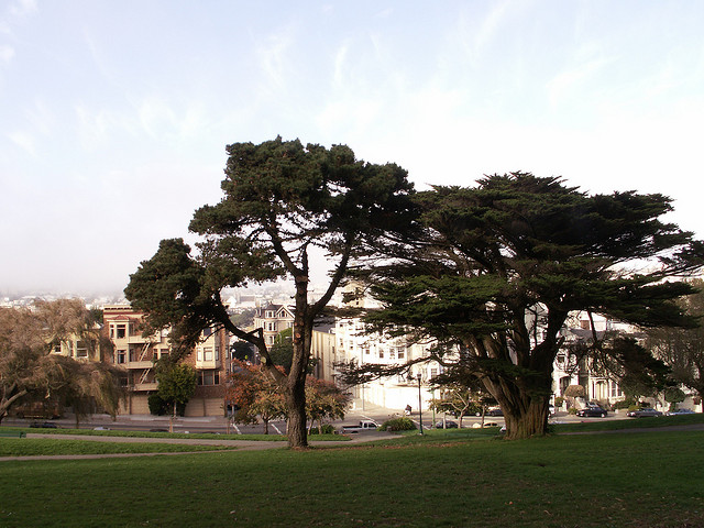 Another view of Alamo Square. Photo: Nils Breunese.