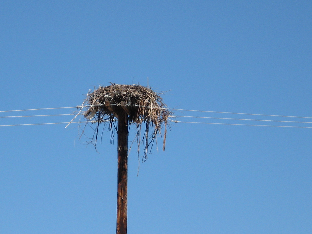 This osprey nest is atop a power line pole at Point Molate. Photo: Greenbelt Alliance.