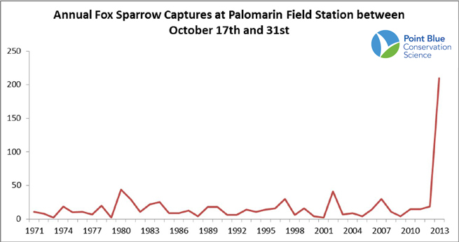 This graph shows the number of captures of Fox Sparrows at the Palomarin Field Station. Data has not been corrected for effort, and both new and recaptured individuals are included. Dates are from 17 to 31 October each year, because there was no banding at Palomarin from 2-16 October 2013, due to the government shutdown. Source: Point Blue Conservation Science