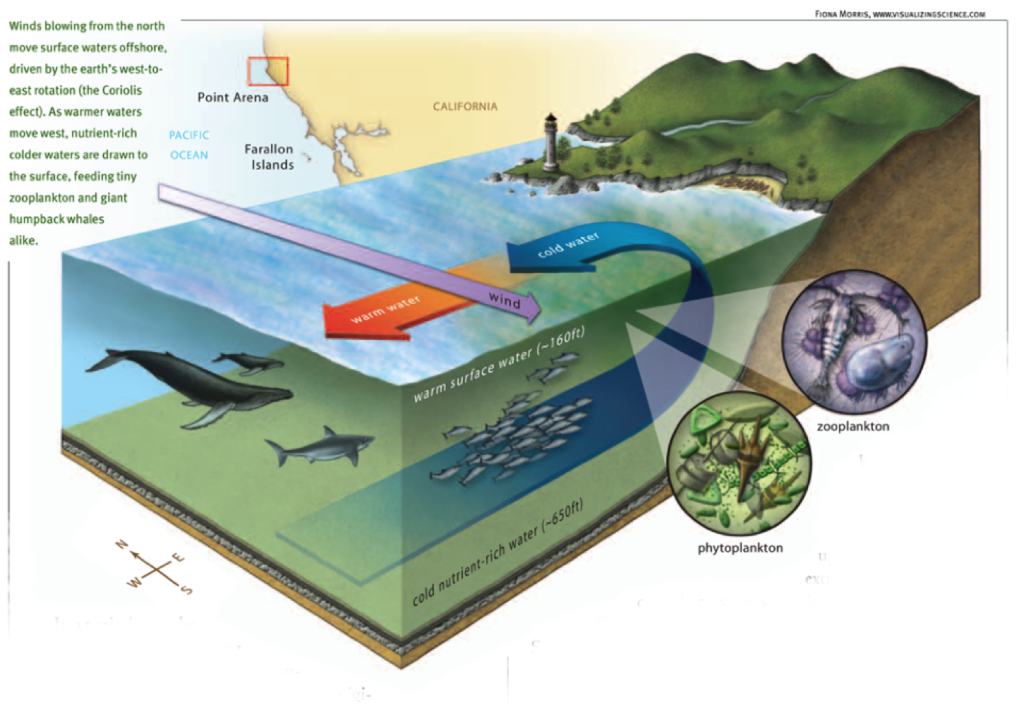 upwelling graphic