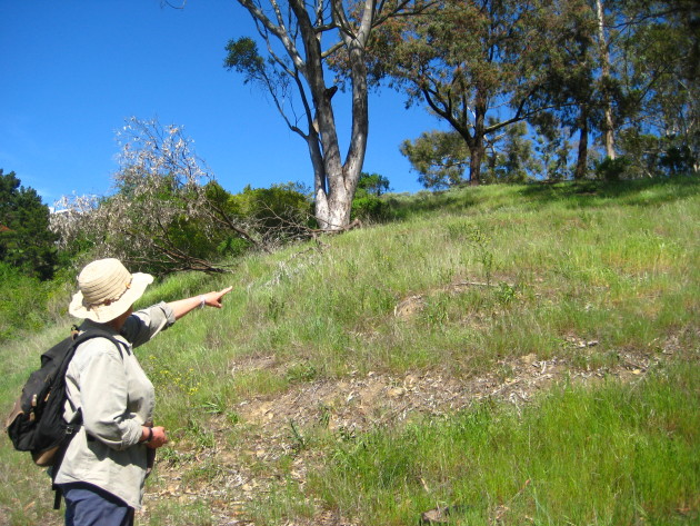 Jenny Hammer points to an area on Motorcycle Hill that was once covered in French Broom. (Photo by Autumn Sartain)