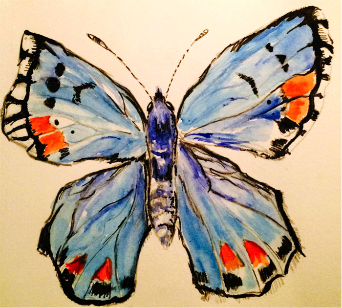 A Sonoran blue butterfly illustrated by Isabel Soloaga.